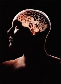 mozek.jpg